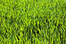 Free Acre With Green Flowers In Rows Stock Photography - 14914782