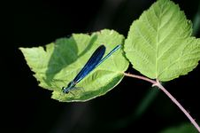 Free Blue Dragonfly Stock Image - 14914791