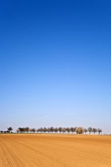 Free Freshly Ploughed Acre With Row Of Trees Stock Image - 14914811