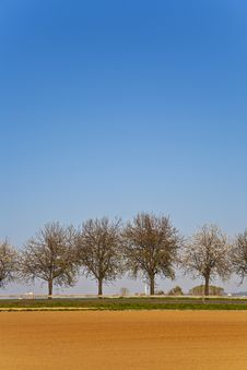 Free Freshly Ploughed Acre With Row Of Trees Stock Image - 14915001