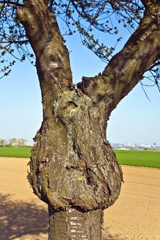 Free Trunk Of Tree Formed Like A Face Stock Photo - 14915110