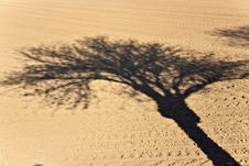 Free Freshly Ploughed Acre With Shadow Of Tree Royalty Free Stock Photo - 14915155