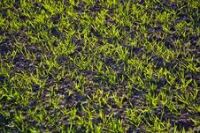 Free Acre With Green Flowers In Rows Stock Photography - 14915372
