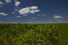 Free Corn Field Royalty Free Stock Photography - 14915717