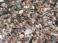 Free Shells Stock Photos - 14916253