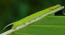 Free Butterfly Caterpillar Stock Photos - 14916453