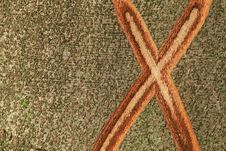 Free X Mark On The Bark Of A Tree Stock Photo - 14918350