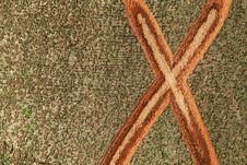 X Mark On The Bark Of A Tree Stock Photo