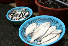 Flounder.Fish Market In South Korea Stock Images