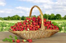 Free Strawberries In Basket Stock Photography - 14919142