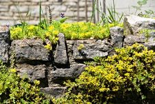 Free Rock Garden Stock Photography - 14919272