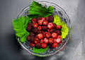 Free Red And Purple Raspberries Stock Photos - 14921493