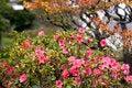 Free Japanese Autumn Garden Stock Image - 14925881
