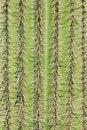 Free Saguaro Cactus Plant Royalty Free Stock Photo - 14927115
