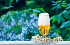 Glass Of Beer In The Garden Royalty Free Stock Photo