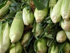 Free Corn On The Cob Stock Photo - 14920740