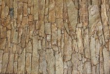 Free Background Bark Brown Look Beautiful Royalty Free Stock Photos - 14922938