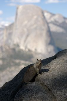 Free Half Dome Squirrel Royalty Free Stock Photo - 14923505