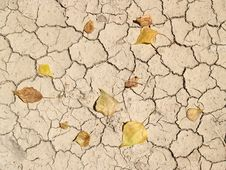 Free Cracked Earth Royalty Free Stock Photos - 14924168