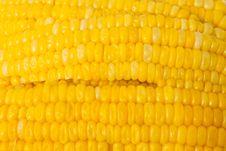 Free Corn Royalty Free Stock Photo - 14924505