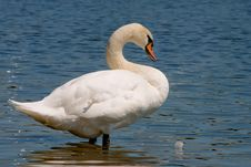 Free Swan At The River Stock Photo - 14924870