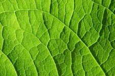 Free Green Leaf Stock Images - 14925334