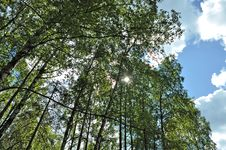 THE SUN IN THE SUMMER FOREST Stock Image