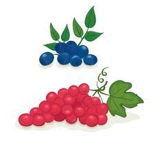 Grapes And Blueberries Stock Image