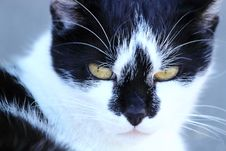 Free Close Up Cat Portrait Stock Photography - 14926652