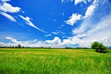Free Green Farm Or Green Field And Blue Sky Royalty Free Stock Photo - 14928405