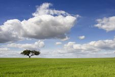 Free Spring Landscape Royalty Free Stock Photos - 14928528