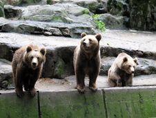 Free Three Bears Stock Photo - 14929120