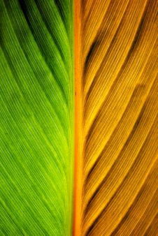 Free Leaf Texture Stock Images - 14929264