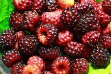 Free Red And Purple Raspberries Stock Images - 14929574