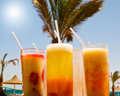 Free Fresh Cocktails Opposite Big Palm. Stock Photo - 14934980