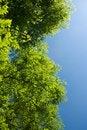Free Under Trees Stock Image - 14935581