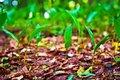 Free Wild Plant Stock Image - 14936361