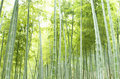 Free Bamboo Forest Stock Photos - 14937173