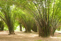Free Bamboo In The Park Royalty Free Stock Photos - 14939708