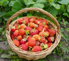 Basket With A Ripe Strawberry