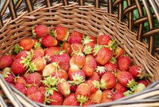 Free Strawberry In A Basket Royalty Free Stock Photo - 14930225