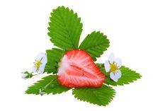 Free Fresh Strawberry Stock Photo - 14930310