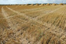 Free Traces In The Field Stock Images - 14931084