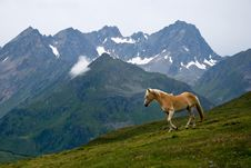Horse On Alpine Pasture Stock Photo