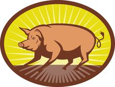 Free Pig Side View With Sunburst Stock Photos - 14932883