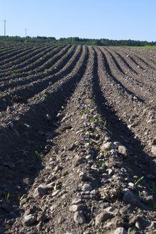 Free Plowed Potato Field Stock Images - 14933104