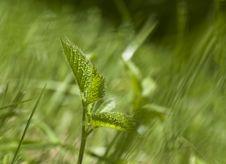Free Grass Stock Photos - 14933733