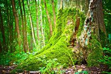 Free Trees Stock Photos - 14935093