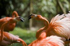Free Flamingo Portrait Royalty Free Stock Photography - 14935287