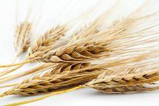 Free Barley Stock Image - 14935901